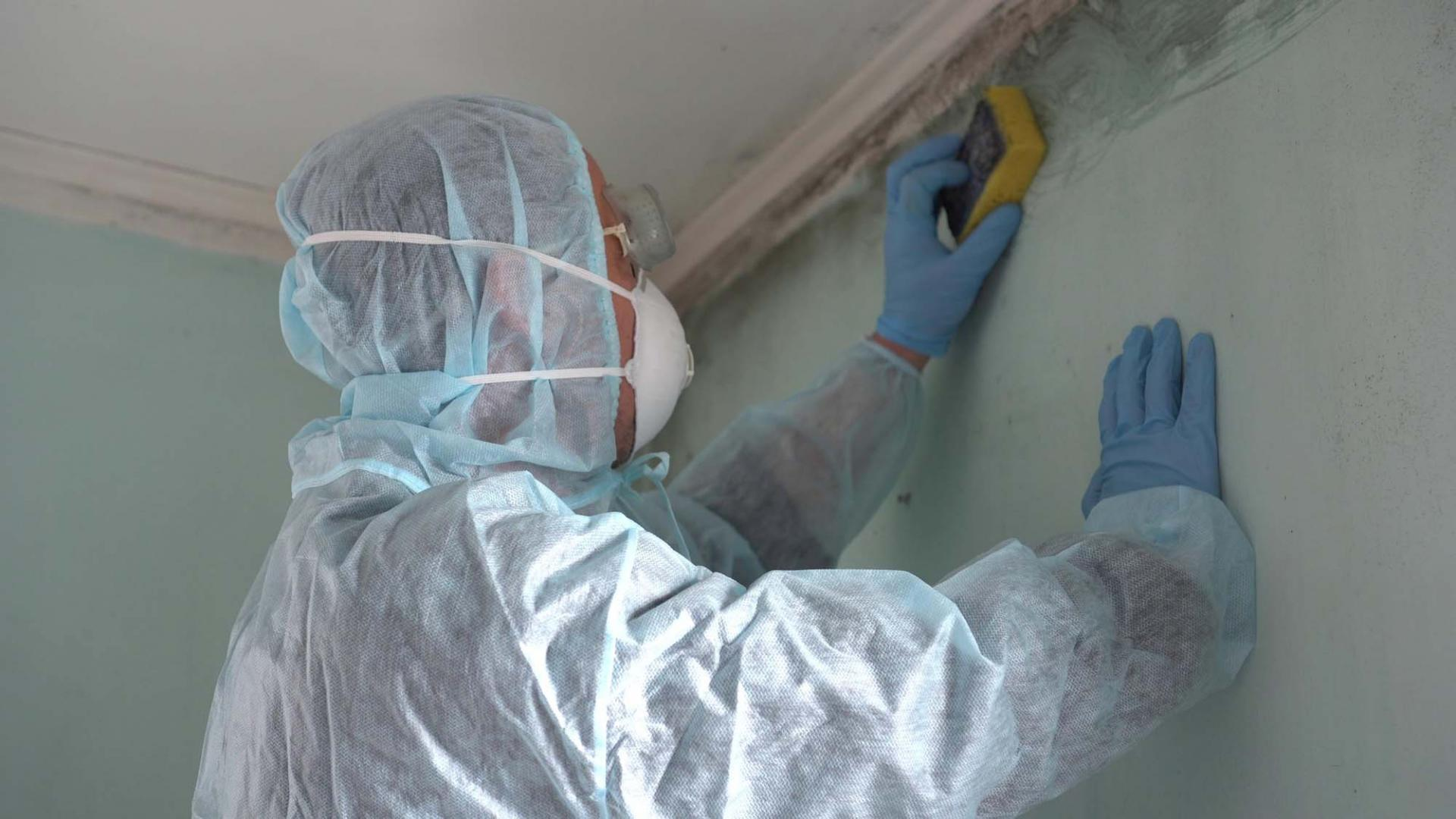 When Do You Need Mold Remediation Services? - Arizona